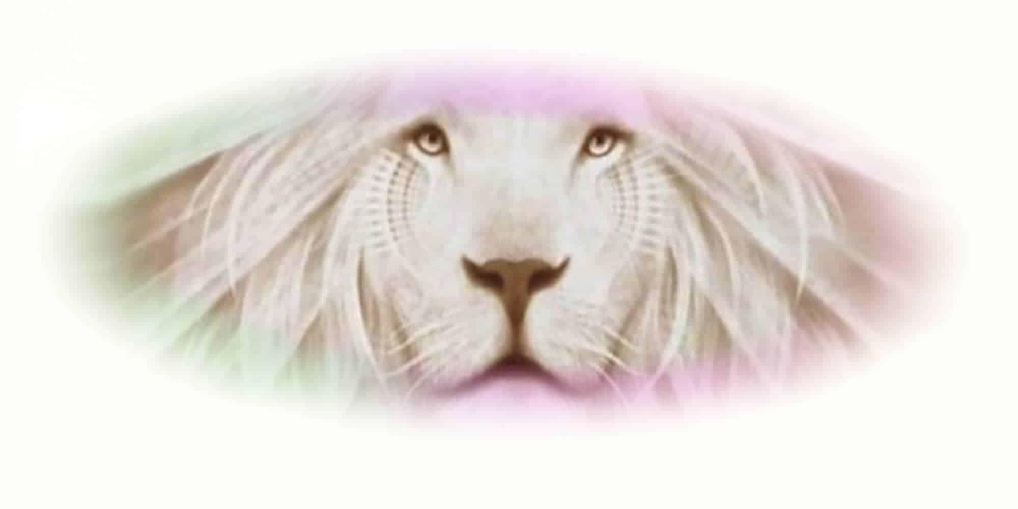 """Titelbild weißer Löwe von Ayahuasca Retreat """"2 Tages Retreat"""""""